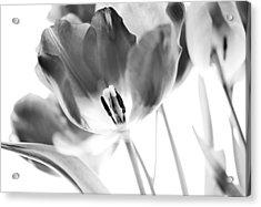 Tulips Acrylic Print by Silke Magino