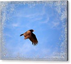 Turkey Vulture Acrylic Print by Brenda Bostic