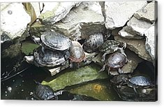 Turtle Party Acrylic Print by Lisa Young