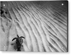 Turtle Ridge Acrylic Print by Sean Davey