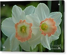 Twins Acrylic Print by Kathleen Struckle