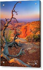 Twisted Remnant Acrylic Print by Inge Johnsson