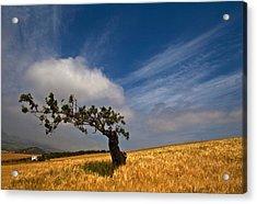 Twisty Road, Near Casabermeja, Malaga Acrylic Print by Panoramic Images