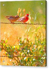 Two Birds On A Wire Acrylic Print by Wingsdomain Art and Photography