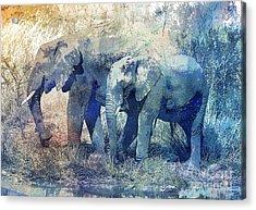 Two Elephants Acrylic Print by Jutta Maria Pusl