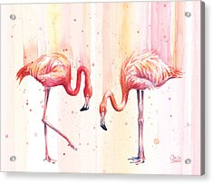 Two Flamingos Watercolor Acrylic Print by Olga Shvartsur