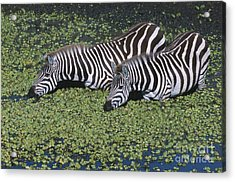 Two For Lunch Acrylic Print by Sandra Bronstein