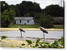 Two For One Acrylic Print by Jack Norton