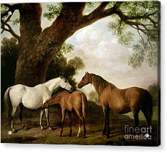 Two Mares And A Foal Acrylic Print by George Stubbs