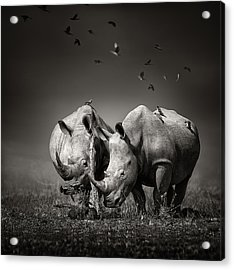 Two Rhinoceros With Birds In Bw Acrylic Print by Johan Swanepoel