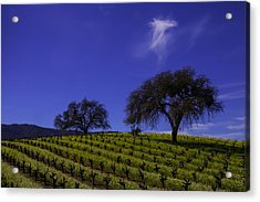 Two Trees In Vineyard Acrylic Print by Garry Gay