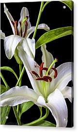 Two Wonderful Lilies  Acrylic Print by Garry Gay