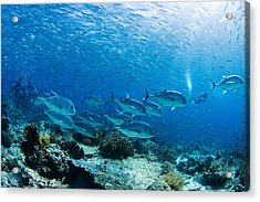 Typical Ocean Scene Acrylic Print by Dave Fleetham - Printscapes