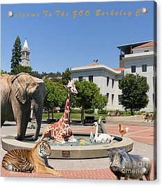 Uc Berkeley Welcomes You To The Zoo Please Do Not Feed The Animals Square And Text Acrylic Print by Wingsdomain Art and Photography