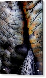 Uncle Tom's Gobbler N'all....  Acrylic Print by Russell Styles