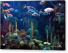 Under The Sea 3 Acrylic Print by Randy Matthews