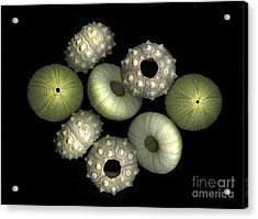 Under The Sea Acrylic Print by Christian Slanec