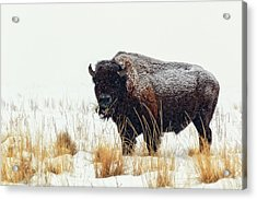 Under The Snow Acrylic Print by Joan Escala