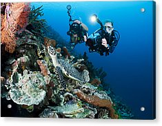 Underwater Photography Acrylic Print by Dave Fleetham - Printscapes