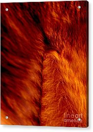 Untamed Vortex Acrylic Print by P Russell