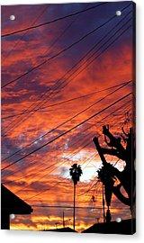 Urban Sunrise Acrylic Print by Shannon McMannus