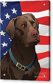 Usa Chocolate Lab Acrylic Print by Joe Barsin