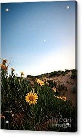 Utah Coral Sand Dune Flowers Acrylic Print by Ryan Kelly