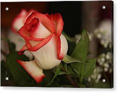 Valentine Rose Acrylic Print by Yvonne Wright