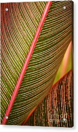 Variegated Ti-leaf 1 Acrylic Print by Ron Dahlquist - Printscapes