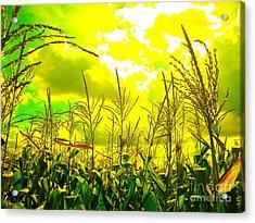 Vegetable Soul Acrylic Print by Chuck Taylor