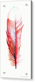 Vermilion Feather Acrylic Print by Willow Heath