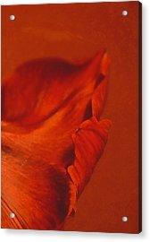 Vermilion Acrylic Print by Odd Jeppesen
