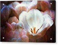 Vesper Tulips Acrylic Print by Moon Stumpp