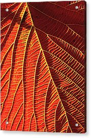 Vibrant Viburnum Acrylic Print by ABeautifulSky Photography