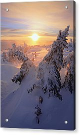 View Of Snow-covered Trees At Mont Acrylic Print by Yves Marcoux