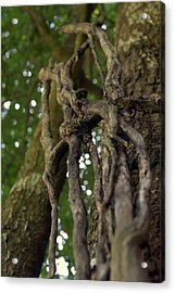 Vine On Tree Acrylic Print by Kristin Smith