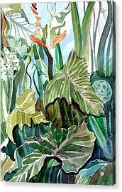 Vines Acrylic Print by Mindy Newman