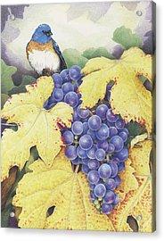 Vineyard Blue Acrylic Print by Amy S Turner