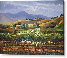 Vineyard In California Acrylic Print by Heather Coen