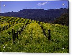 Vineyard Mustard Acrylic Print by Garry Gay