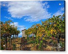 Vineyard Temple Acrylic Print by Mike Dawson