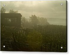 Vineyards Beside A Villa In The Fog Acrylic Print by Todd Gipstein