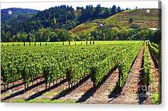 Vineyards In Sonoma County Acrylic Print by Charlene Mitchell