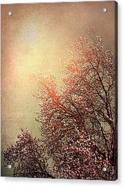 Vintage Cherry Blossom Acrylic Print by Wim Lanclus