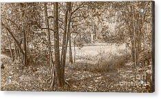 Vintage Deception Bay Woodland Acrylic Print by Jorgo Photography - Wall Art Gallery