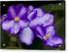 Violet Dreams Acrylic Print by William Jobes