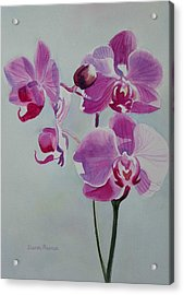 Violet Orchid Acrylic Print by Sharon Freeman
