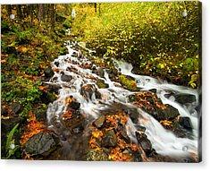 Wahkeena Autumn Acrylic Print by Mike  Dawson
