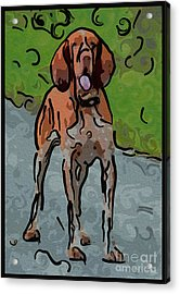 Waiting Patiently Over Here Acrylic Print by Omaste Witkowski