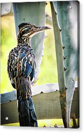 Waiting  Acrylic Print by Saija  Lehtonen